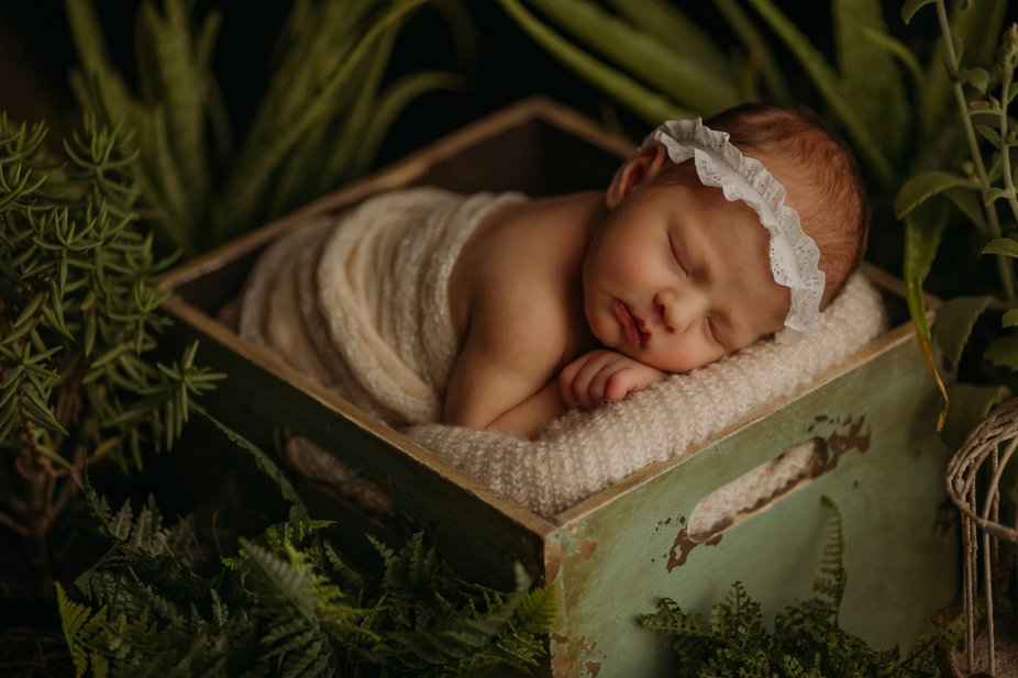 Sweet newborn surrounded by succulents
