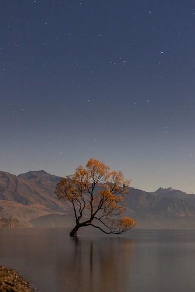 Wanaka tree at night