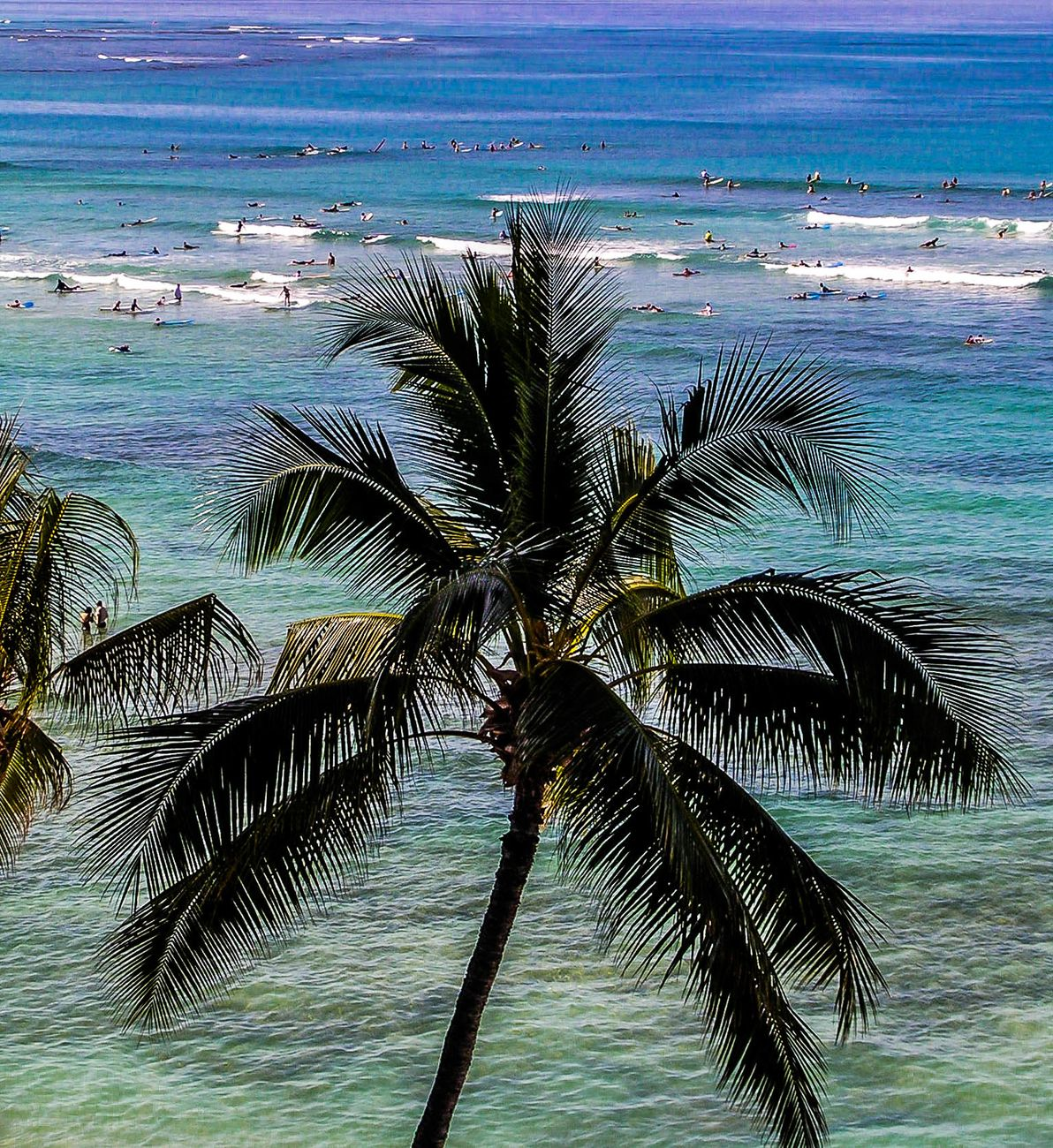 Palm tree and surfing