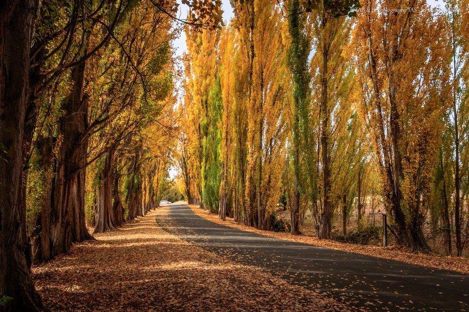 The drive in to the Salmon Ponds in Tasmania is a beautiful scene at this time of year. Captured ...