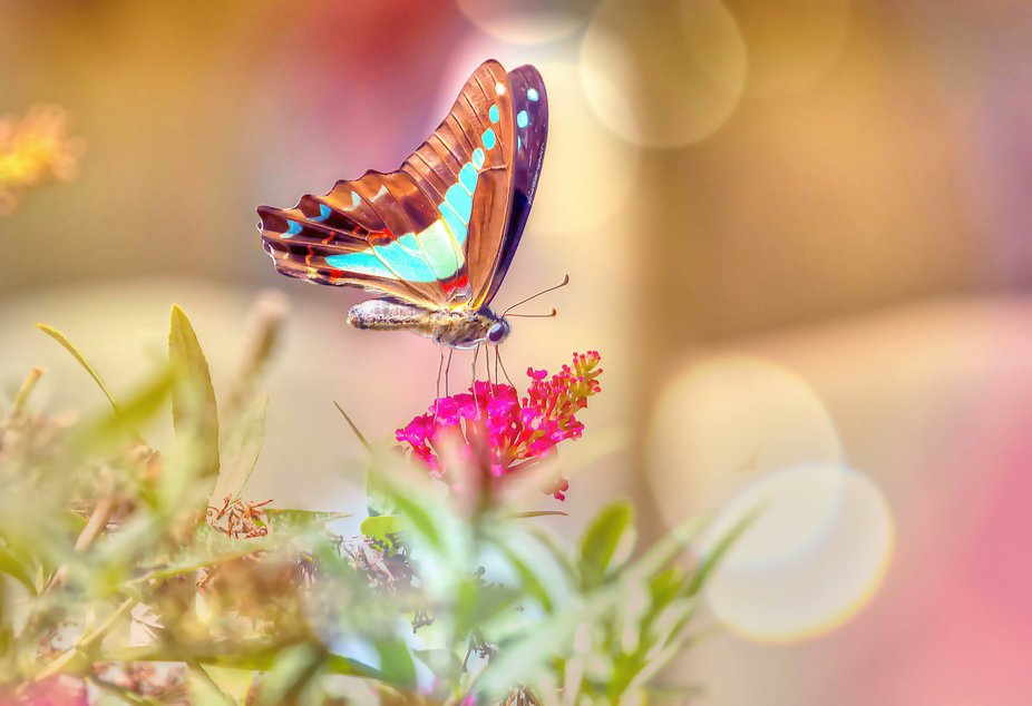 All butterflies see colours like we do, plus they also see ultraviolet and polarized light. Howev...