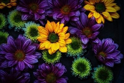 color delight