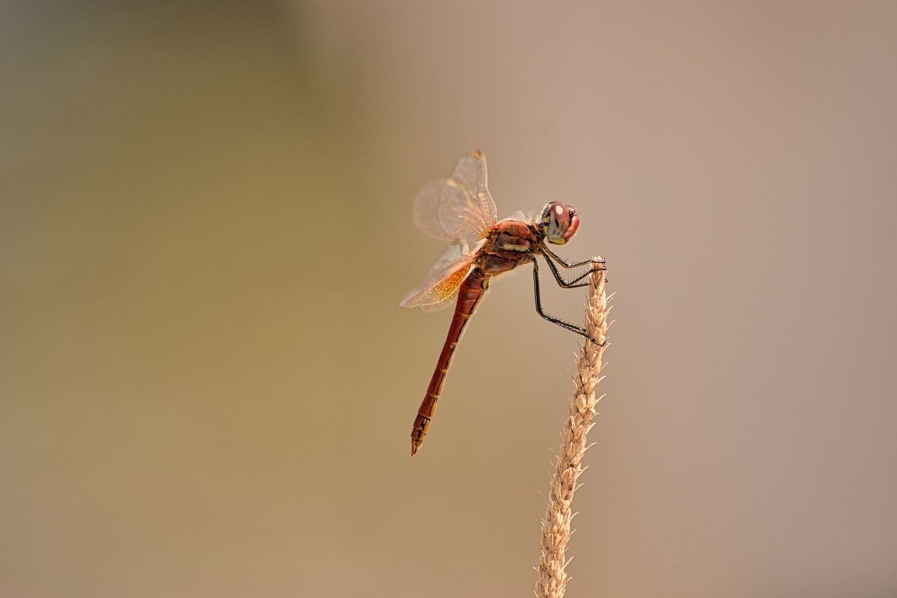 Took this close-up of a dragonfly in Corfu