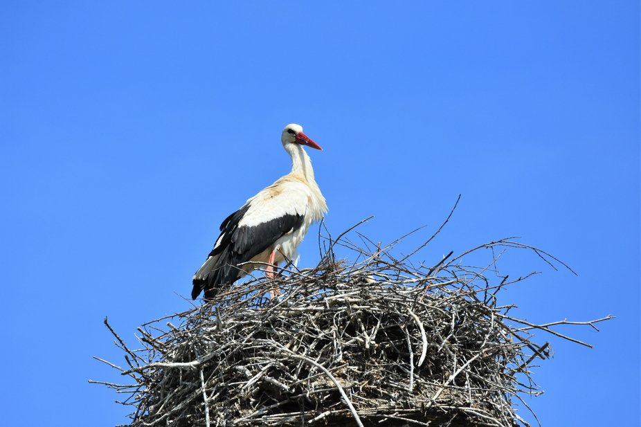 stork saw me as I photographed him :-)