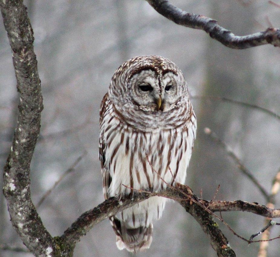 Owl 5 2019.JPG