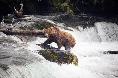 One of the most unique experiences of my life was witnessing the bears at Brooks Falls catching salmon . . . #visualfolk #natgeo #natgeowild #canon #tokina #teamtokina #Instagram #discoverearth #folkscenery #moodygrams #naturelovers #neverstopexploring #e