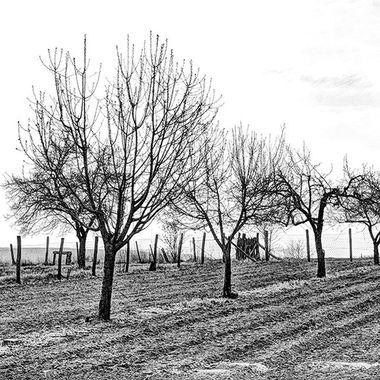 Ancestral Farm