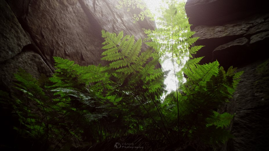Looking up at fern from a crevice going down into the Ice Caves at Sam's Point, NY    Us...