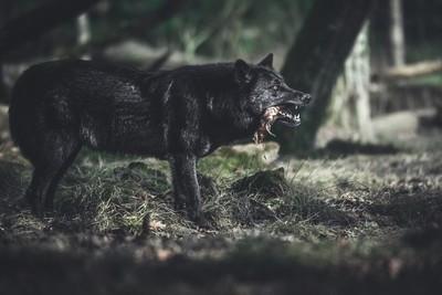 The dark predator