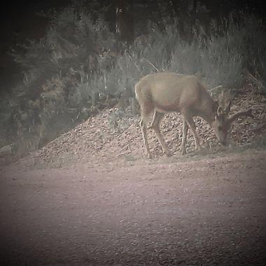 Driveway Buck