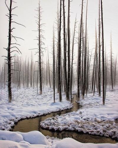 Black River Snow  Yellowstone
