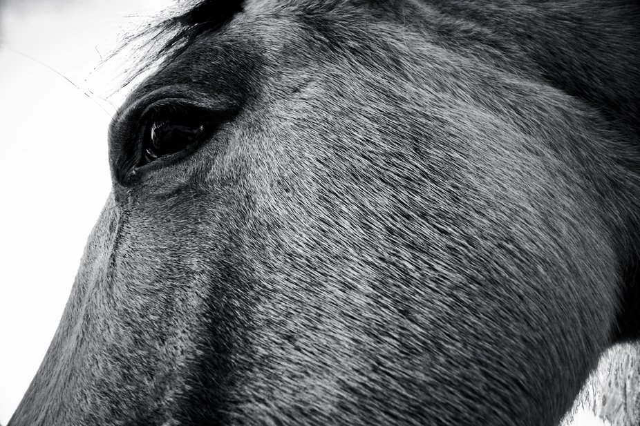 Horse macro, showing fur texture and large soft eye