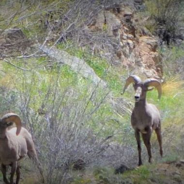 These guys were running up on the mountain in the Clear Creek Canyon.