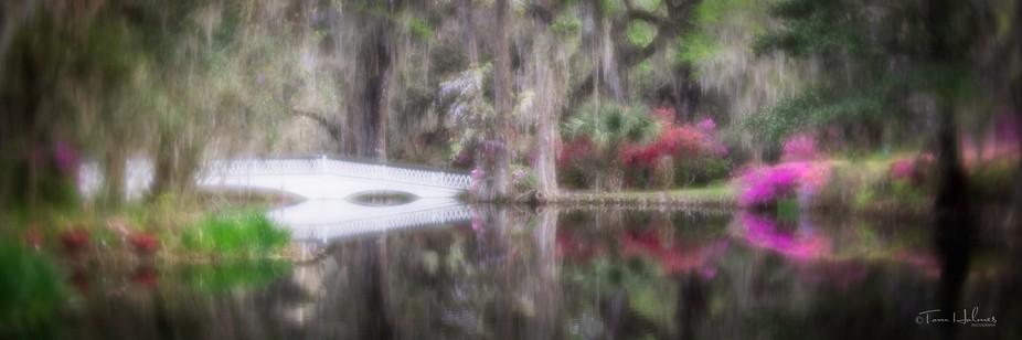 This was taken at Magnolia Gardens in South Carolina.
