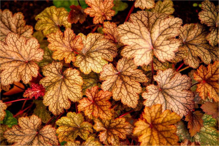 leaves, nature, fall colors, vines, project 52