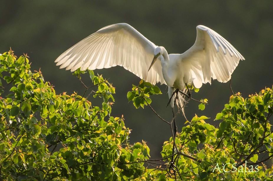 Smith Oaks Bird Sanctuary on High Island in Texas has a rookery, sort of a nursery for birds. The...