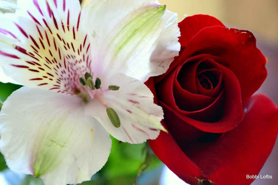 White flower with red rose