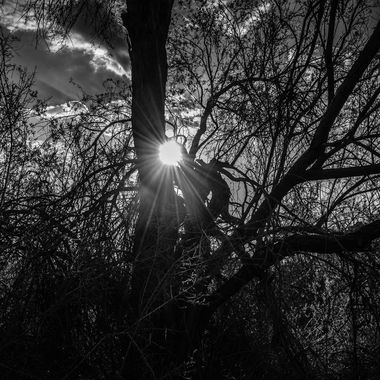 I captured the sun through the tree and turned the photo into a black and white.