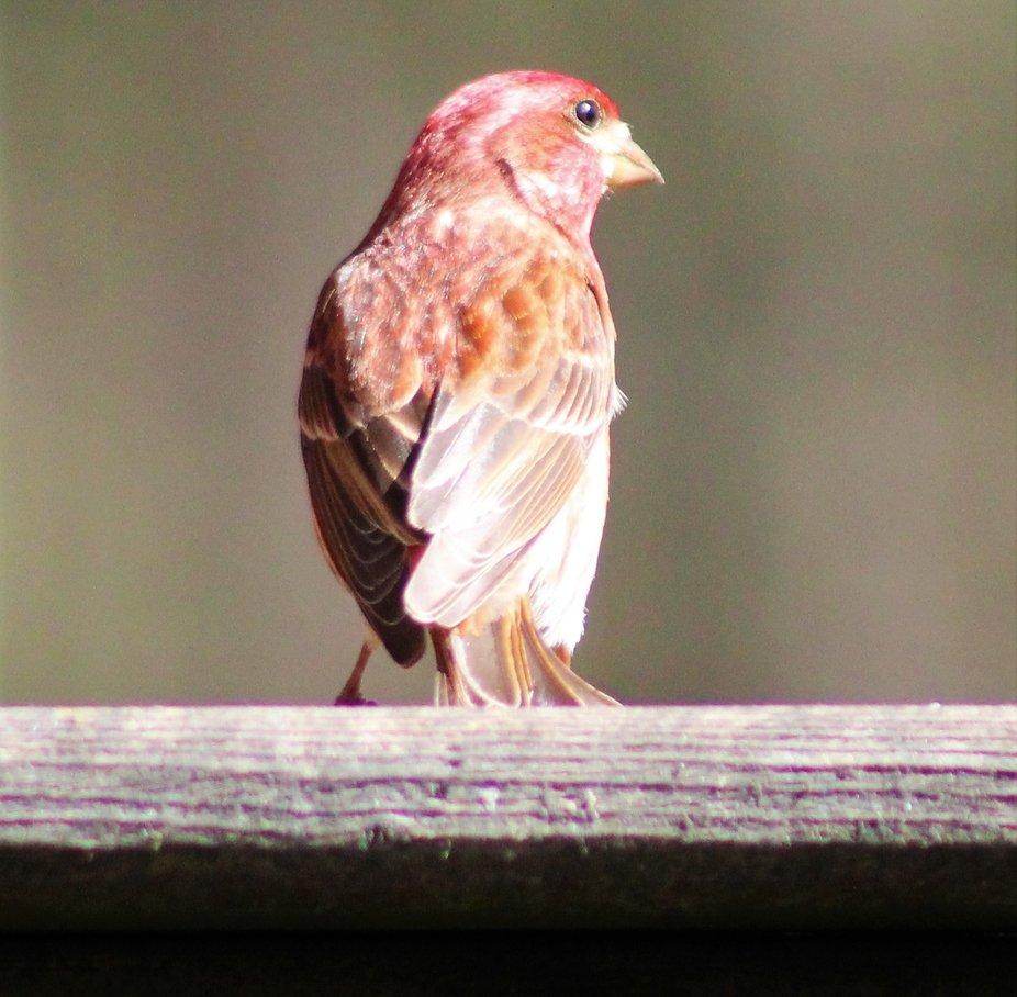 Bird 9.JPG