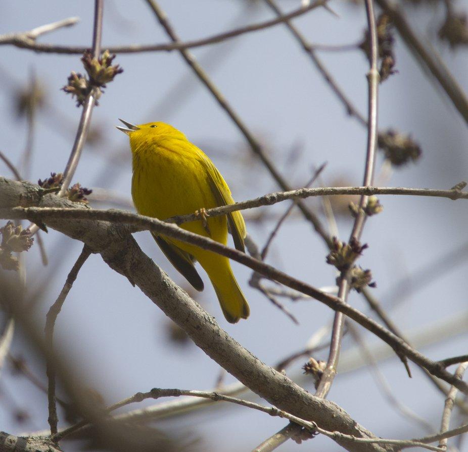 PQ birds_1.JPG
