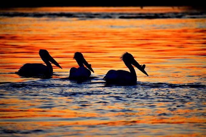 Manitou Rapids on Rainy River at sunset D3400 vivid 70-300mm lens