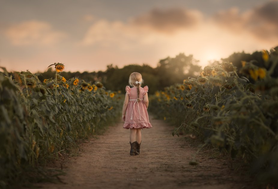 Walking through a field of sunflowers