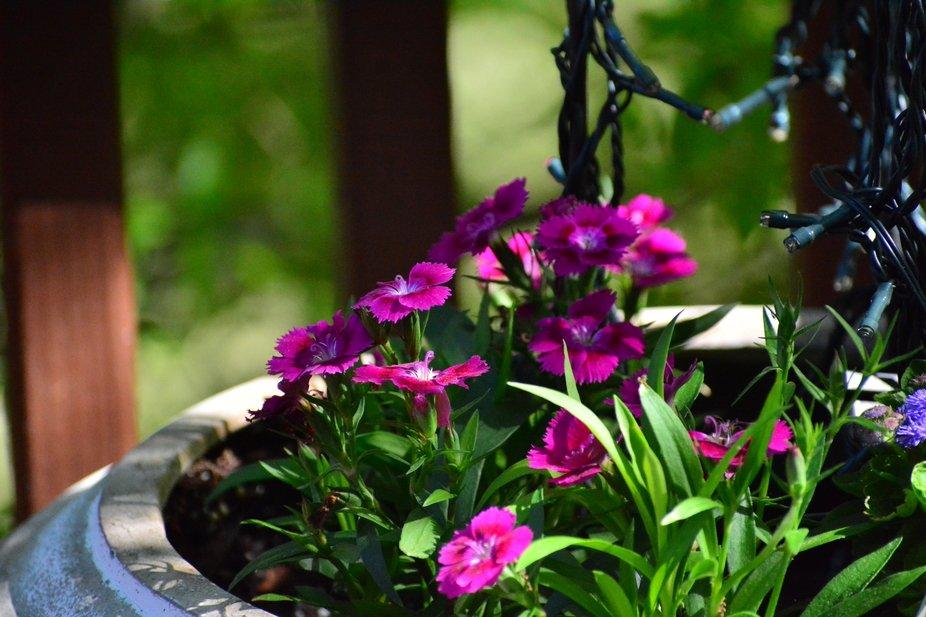 Purple Flower .JPG