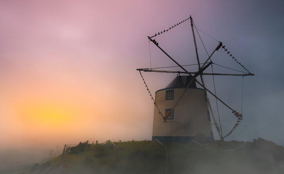 Avis Windmill