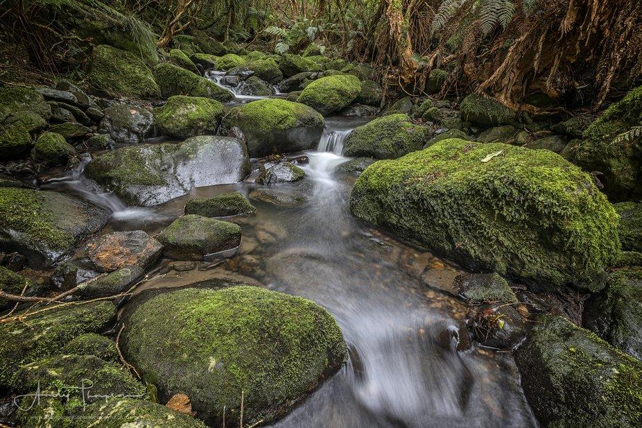 Bethune's Gully - Dunedin