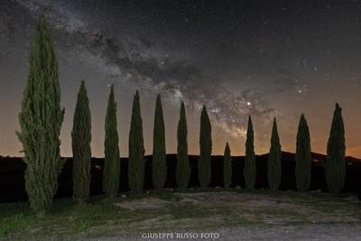 Cipressini San Quirico D'Orcia