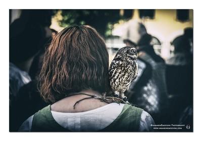 Owl friend on the shoulder