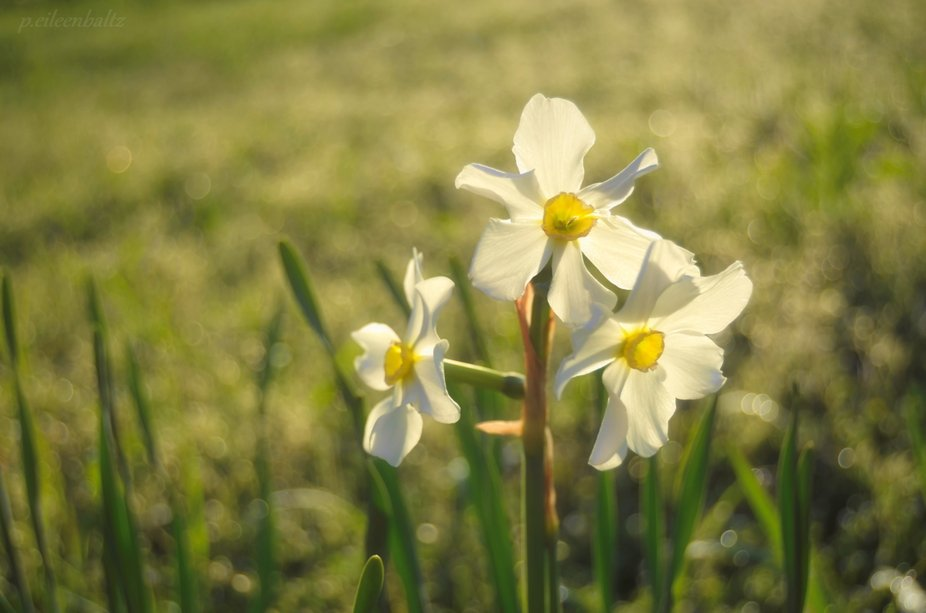 Spring Blooms and Bokeh