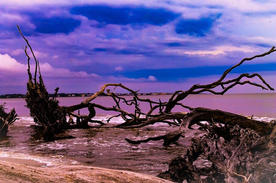 Driftwood at Driftwood Beach3-2