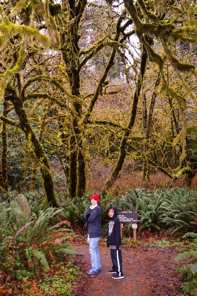 A walk amoung the Giant Redwoods