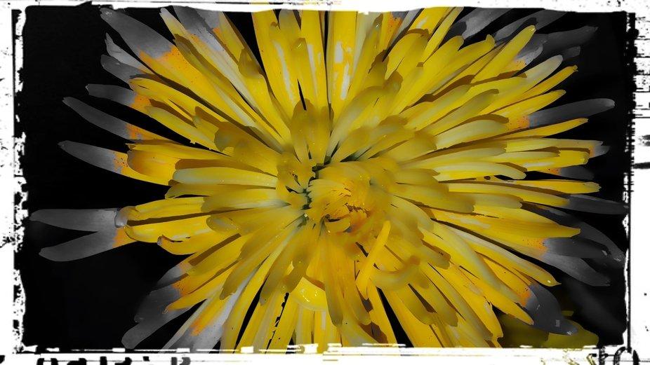 Yellow Flower Burst