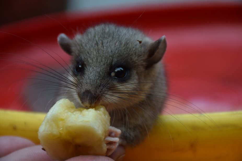 We found a fat dormouse, which was hurt and gave him some food.  No edit done, just some cropping.