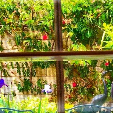Speing flower views everywhere!