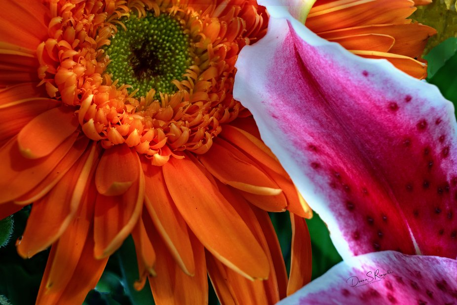 Orange and Lily