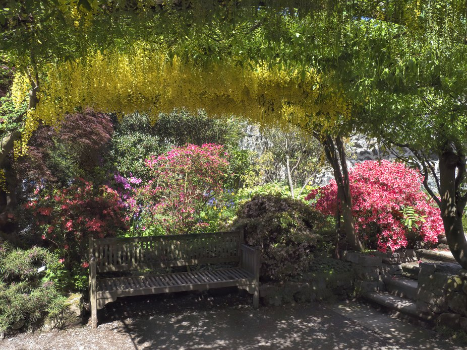 A seat at the entrance to Bodnant Arch. The Laburnum is expected to bloom in full in the next week