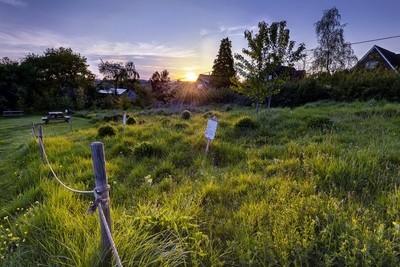 Wild Flower Meadow Sunset