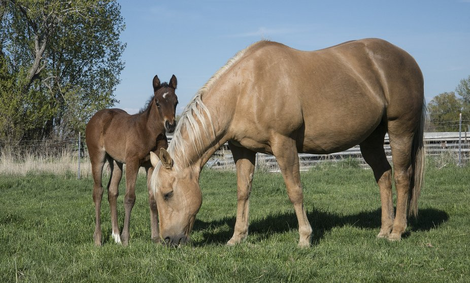 Filly and mare 1