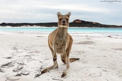 LuckyBay_Kangaroo_Beach