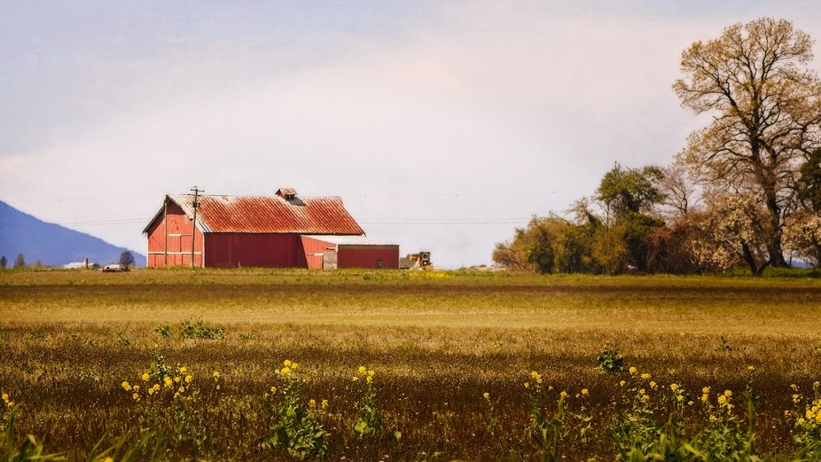 A barn in a field in the Skagit Valley of Washington. Textured to give a painterly look and feel...