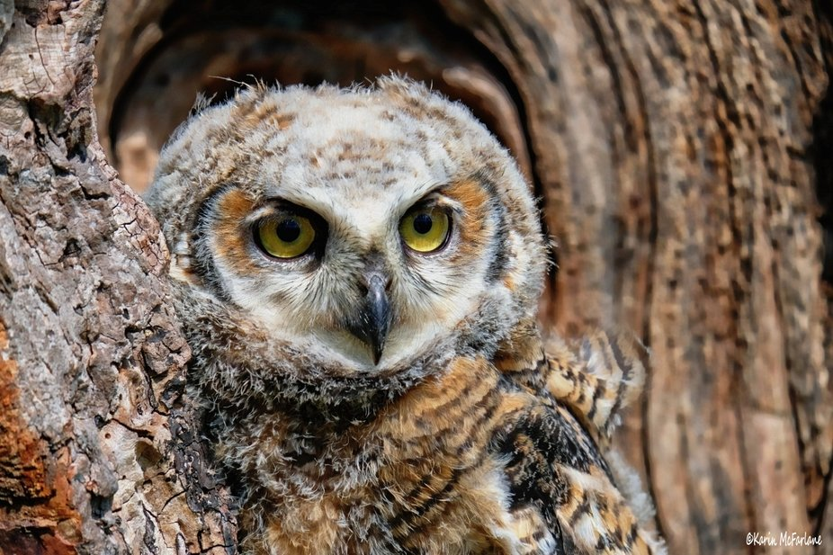 """I took this photo at the """"Canadian Raptor Conservancy"""".  This is my 3rd time vi..."""