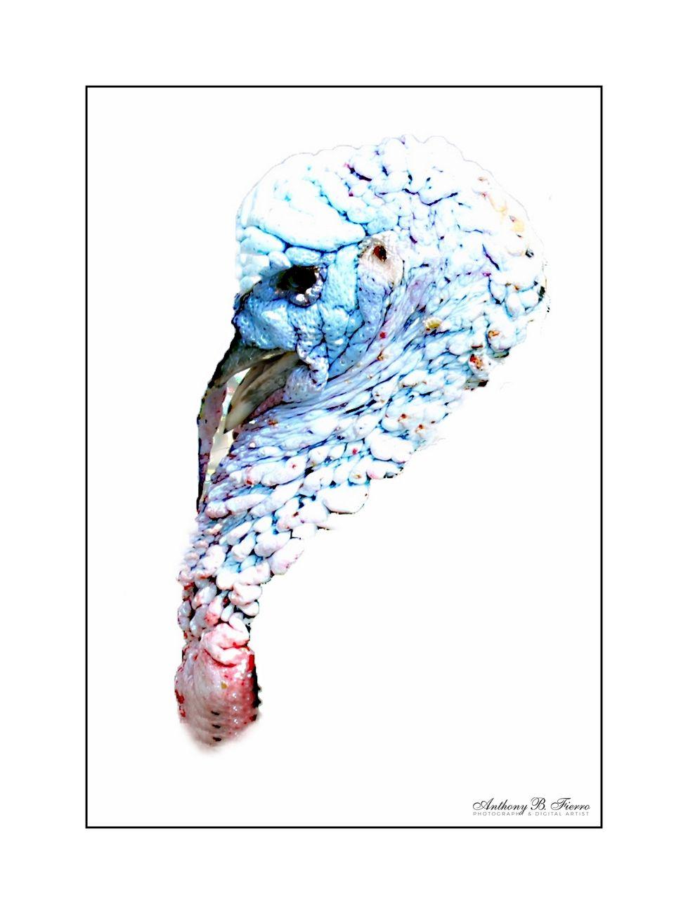 Bird Art (2)