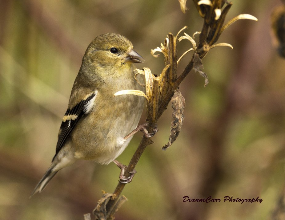 Bird on Stalk
