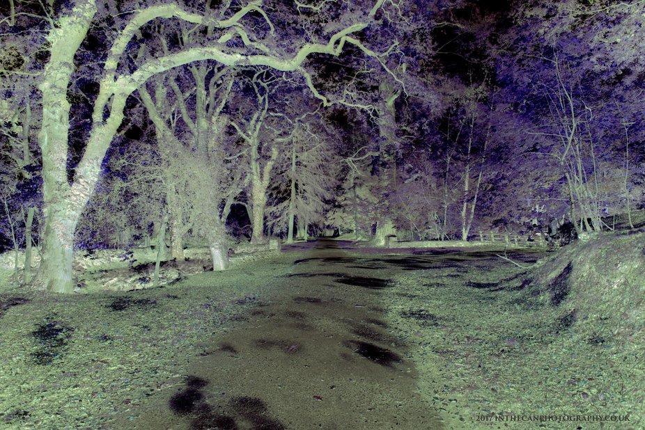 Lanhydrock woods artistic rendering