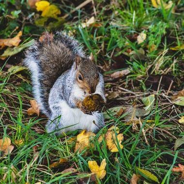 squirrel-8294