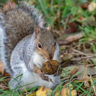 squirrel-8299