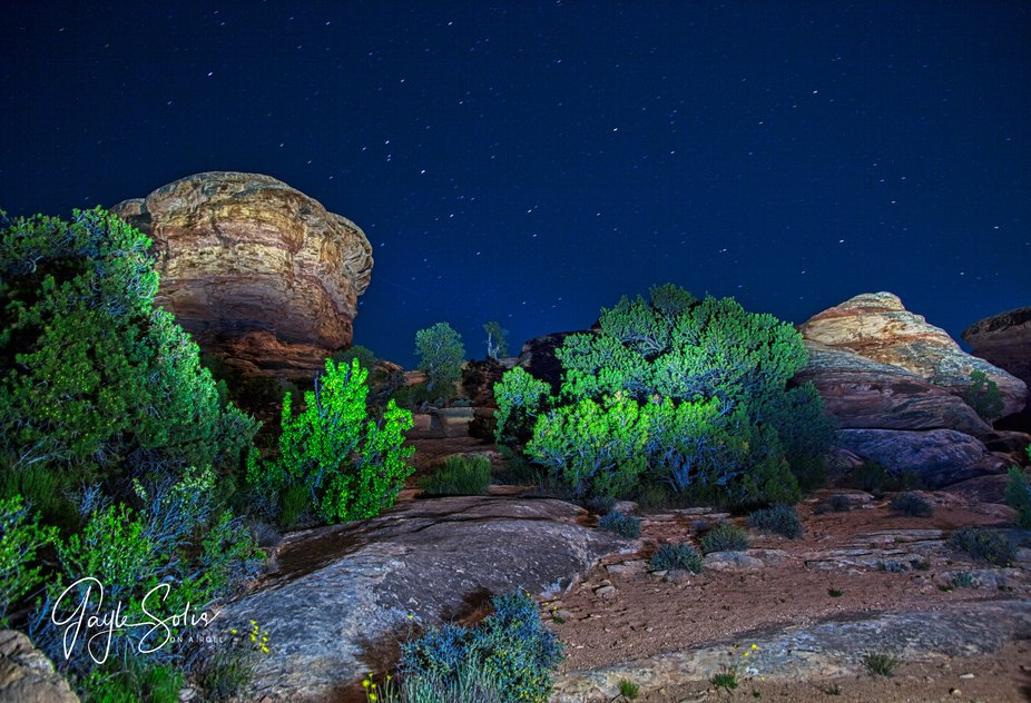 Night shot of rock formations in the Needles district of Canyonlands National Park, Utah.